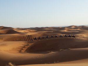 Real Sahara desert (Erg Chebbi near Merzouga) : Camel Ride & overnight in desert tent